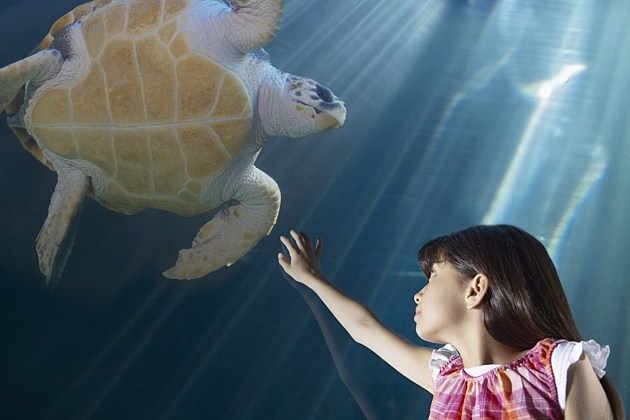 Girl and Sea Turtle