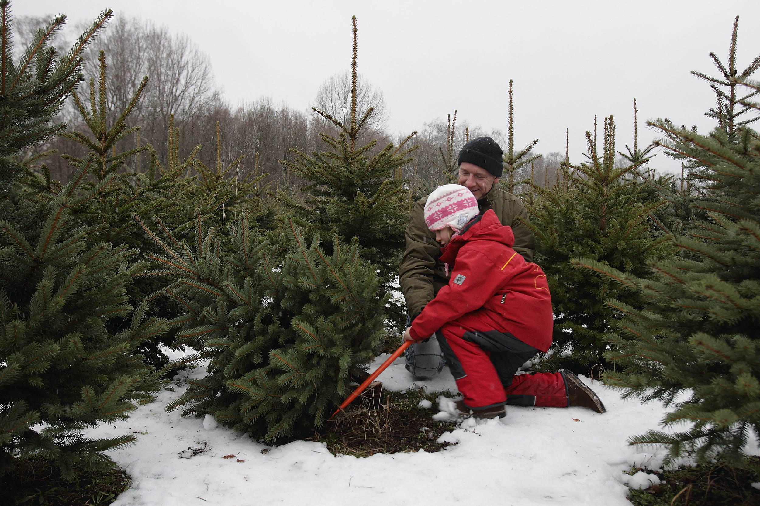 Here's a Crazy Idea! Cut Down Your Own Xmas Tree!