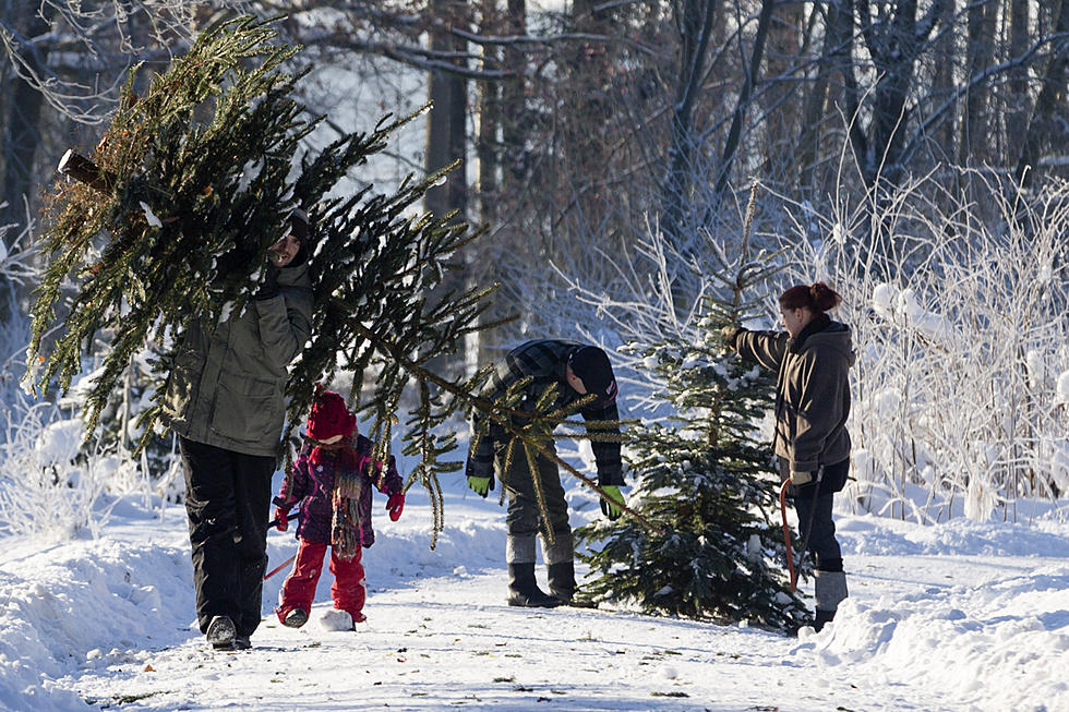 9 Places Around Danbury To Kick It Old School And Cut Down Your  - Christmas Trees To Cut Down