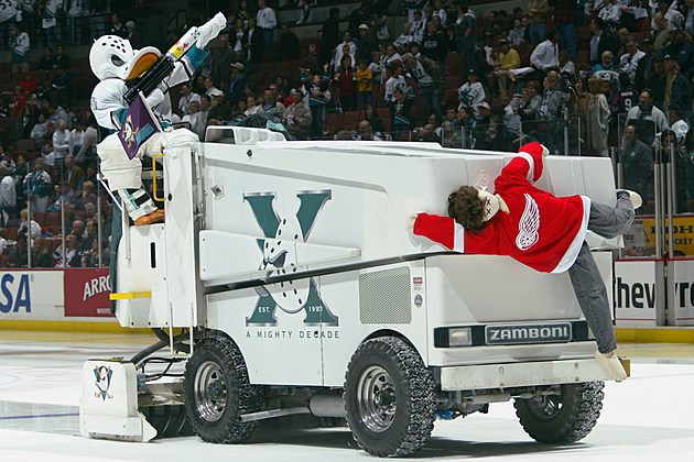 Wild Wing rides on the zamboni