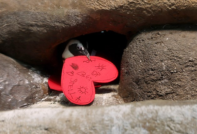 Valentine's Day Celebrated At California Of Sciences